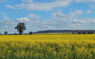 Verge Ag Excited to Announce DataFarming Becoming Exclusive Australian Distributor